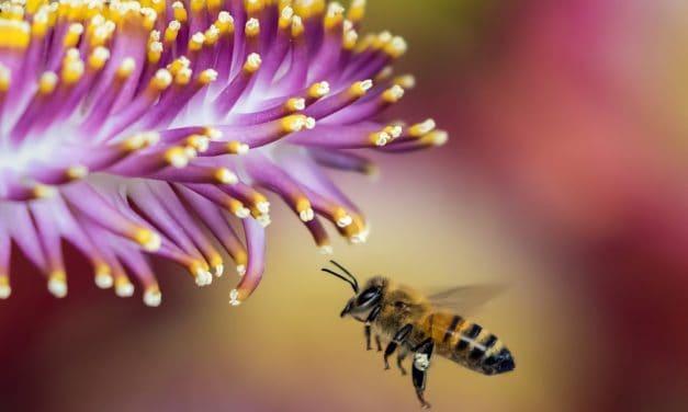Comment se débarrasser d'un nid d'abeille ?