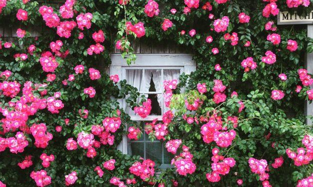 Votre jardin vous fait du bien… Et à la planète aussi !